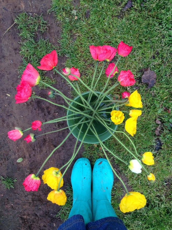 Poppy Harvest
